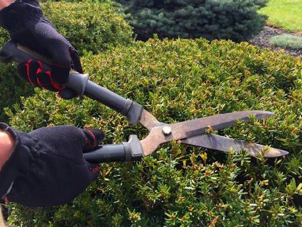 shrubbery trimming dry ridge ky