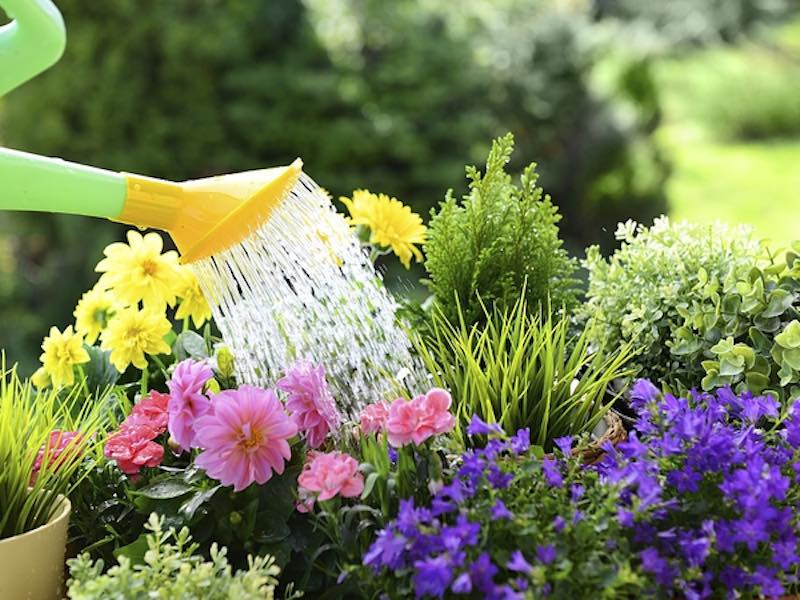 watering plant care dry ridge ky